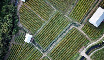 Organik ve Konvansiyonel Tarım Arasındaki Farklar