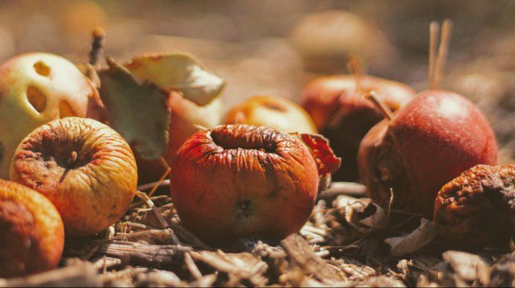 Gıda Atıklarını Azaltmanın Yolları
