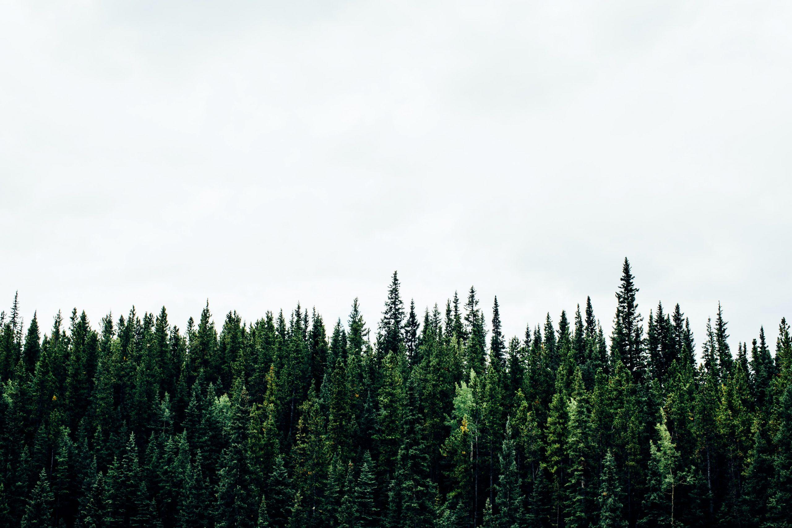 ağaçlandırma çalışması karbon ayak izi