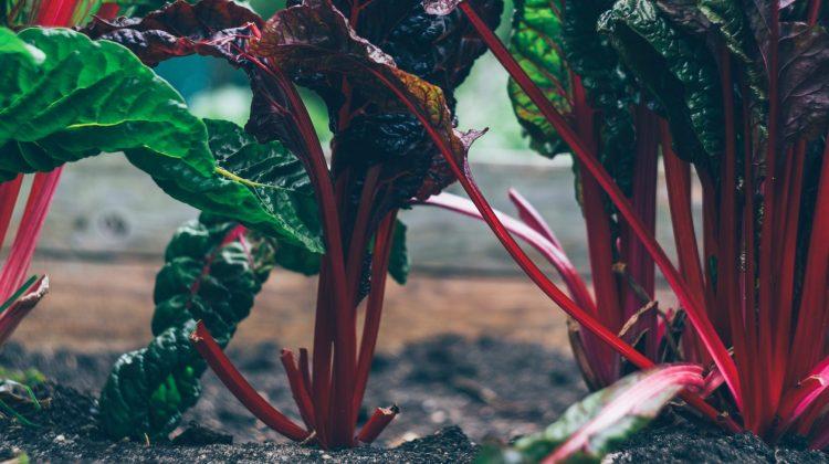 Pestisidlere En Az Miktarda Maruz Kalmak İçin Neler Yapabiliriz?