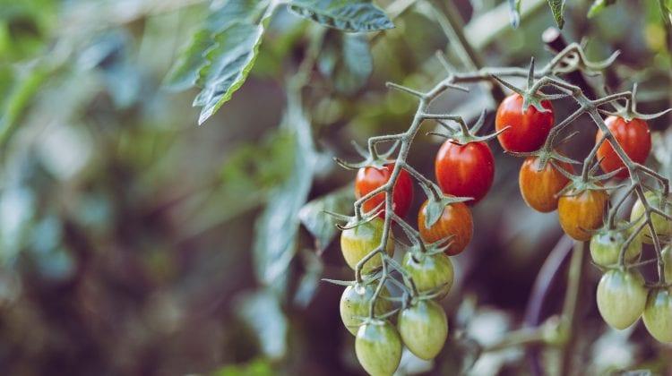 Sürdürülebilir Yaşamı Destekleyen Bir Hobi: Balkon Bahçeciliği