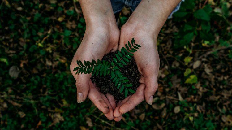 Dünya Günü'nün Bu Yılki Teması: Dünyamızı Yeniden Canlandır!