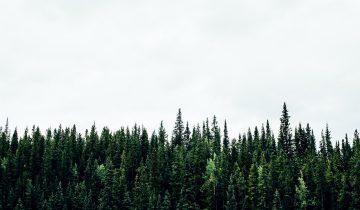 Ormansızlaşma ve Orman Yangınları